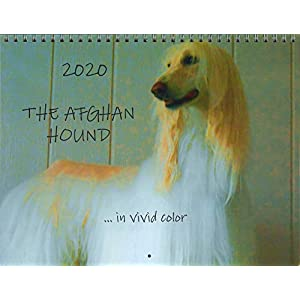 The Afghan Hound .in Vivid Color 2020 Wall Calendar 24