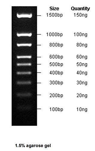 100-1500bp DNA Marker, Ready-to-use by Bio Basic (Image #1)