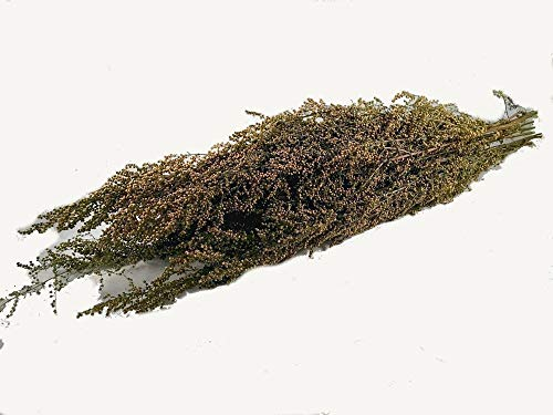 - Natural Preserved SWEET ANNIE herb bunch- naturally fragrant herbal scent~ perfect primitive decoration herb preserved and sold per bunch decorative- fall 2018 harvest.