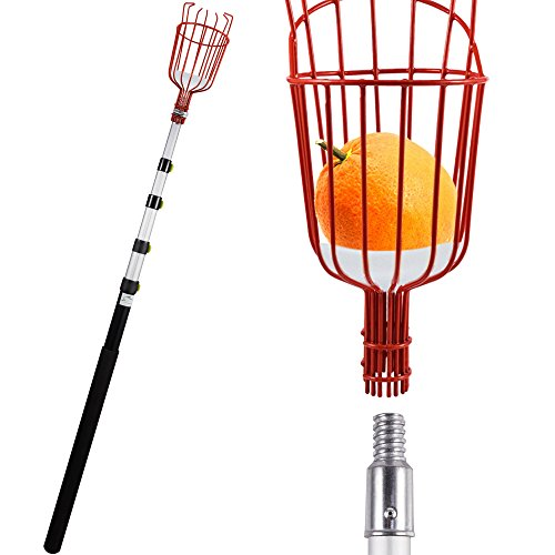Lopunny Fruit Picker 13-foot Lightweight Telescoping Aluminum Pole with Bruise Free Basket for Apple Pear Peach harvesting ()
