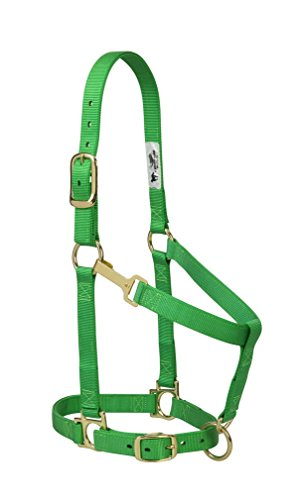 - Weaver Leather Basic Adjustable Nylon Halter, Green, 1