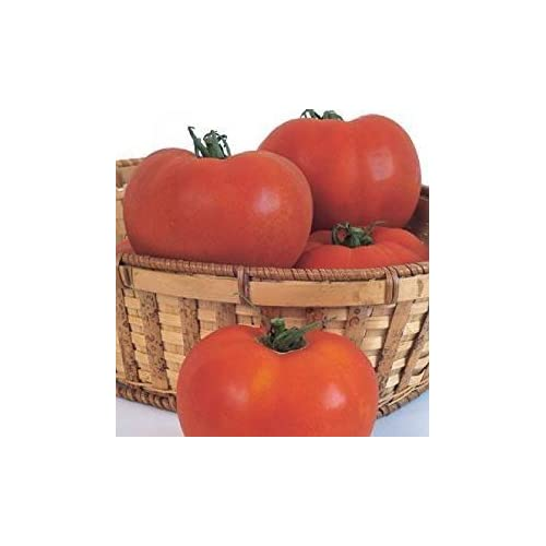 Top David's Garden Seeds Tomato Beefsteak Celebrity DS733RE (Red) 50 Hybrid Seeds