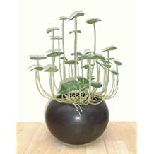 """14.5"""""""" Chinese Money Plant, Artificial (Without Pot)"""
