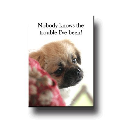 Tibetan Spaniel Trouble Fridge Magnet: Toys & Games