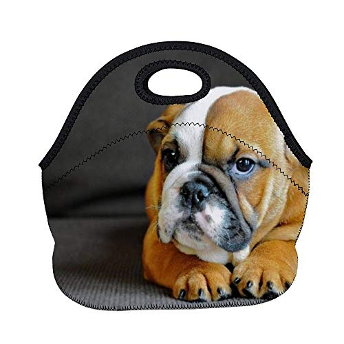 Athena Carroll LunchBags Meal Bag Meal Bag Dog Dog Breed Canidae Mammal Old English Bulldog Bulldog Toy Bulldog British Bulldogs Olde English B color9 Ordinary