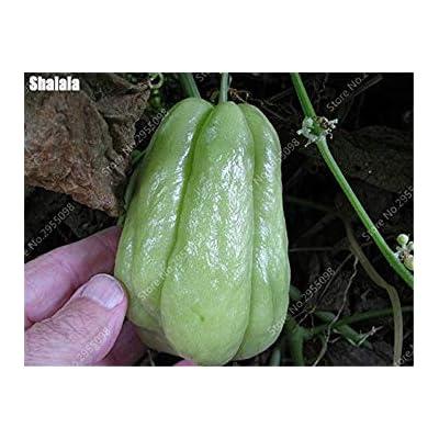 ENVIDESO Seeds: 30 Pcs/Bag Bonsai Chayote Seeds Outdoor Non-GMO Succulent Pumpkin Fruit Vegetables Bonsai Potted Plant for Flower Pot Planters : Garden & Outdoor