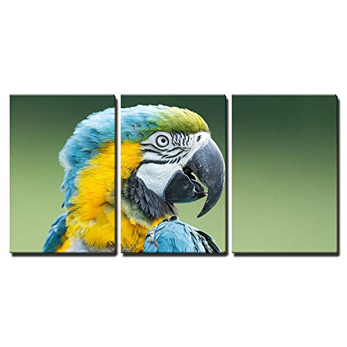 wall26 - 3 Piece Canvas Wall Art - Close-Up of a Macaw Parrot in Nature - Modern Home Decor Stretched and Framed Ready to Hang - 16