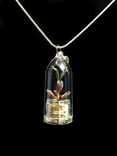 Live Black Phoenix Succulent Necklace Wearable Miniature Succulent Necklace Nature Terrarium Necklace ()