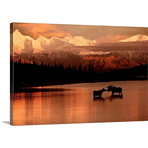 (Moose Kissing in Wonder Lake Denali NP Digital Composite Canvas Wall Art Print, 36