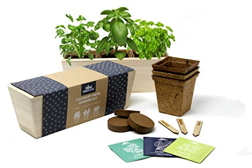 Urban Leaf - Herb Garden Starter Kit | Beginner Friendly Indoor Windowsill Kitchen Planter | Potting Mix, Pots, Markers, Seeds - Everything Needed to Grow Basil Cilantro and Parsley Plants from Seed