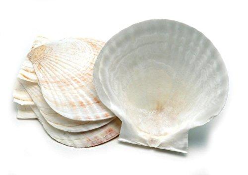 Nantucket Seafood 5