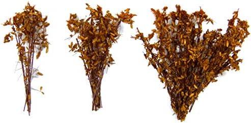 グリーンスタッフワールド 背丈の有る潅木 ドライナチュラル (茎の長さ:4cm) 情景用素材 GSWD-9933