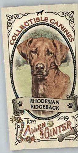 2019 Allen and Ginter Collectible Canines Mini #CC-13 Rhodesian Ridgeback Baseball MLB