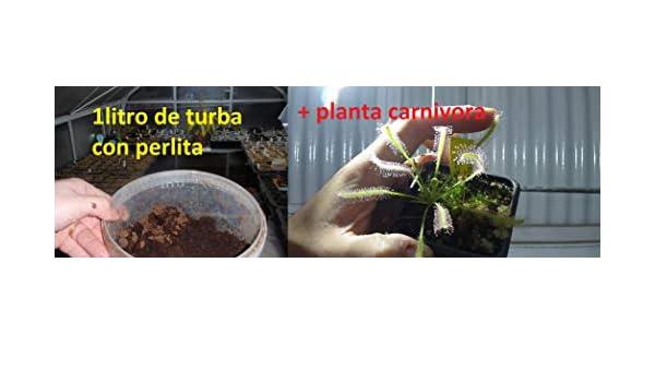 Sustrato 1 litro Turba Natural para plantas Carnivoras + Planta de regalo: Amazon.es: Jardín