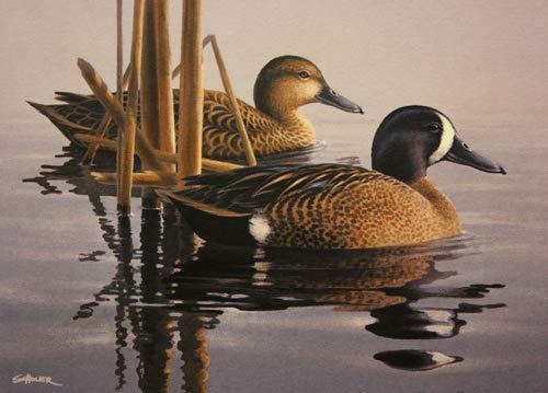 Phil Scholer - Blue-Winged Teal Pair 1993 Minnesota Duck Stamp Print