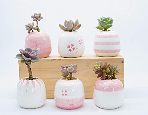 Succulent Planter Pot,Ceramic Tiny Flower Pot Set with Drainage for Home Decor(Pack of 6,Pink)