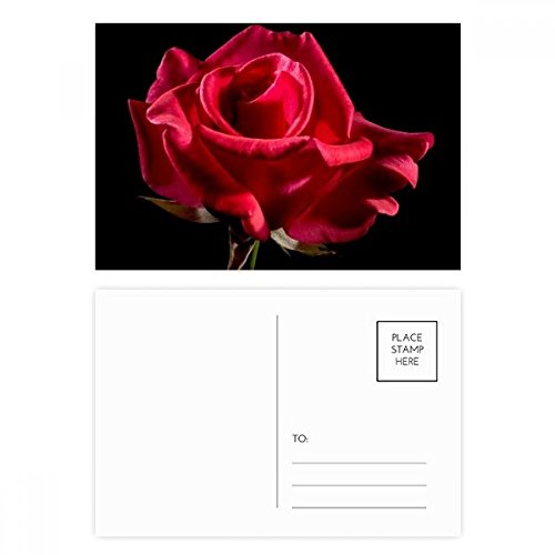 (Dark Red Roses Flowers Postcard Set Birthday Thanks Card Mailing Side 20pcs)