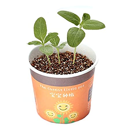 Ouken 1pc Mini Planta Maceta Artificial Planta de Papel Olla Bricolaje Planta Potted diseño Creativo Bonsai