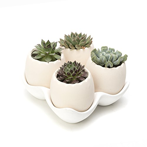 Nattol Egg Shell Design Decorative Medium Beige Ceramic Succulent Planter Pots with a Removable White Ceramic Saucer for Home Decor, Set of 4 (White)