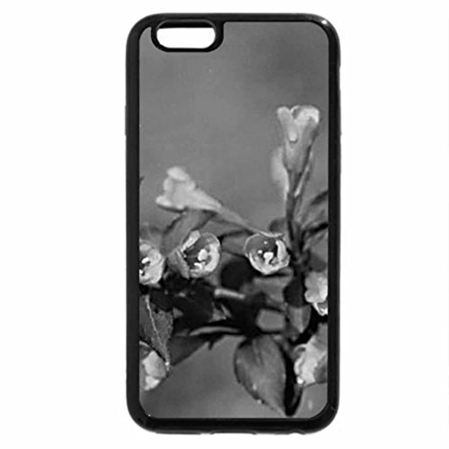 iPhone 6S Plus Case, iPhone 6 Plus Case (Black & White) - WEIGELA FLOWER