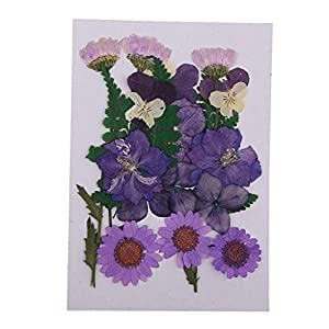 DIY Pressed Dry Flower Daisy Rose Sakura Mini Dried Organic Plants for Makeup Phone Case Decoration Gift Box Manicure 63