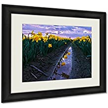 Ashley Framed Prints, Daffodils Fild At Sunset And Reflection In Water Scagit Valley Tulip And, Black, 20x25 Art, AG6540493