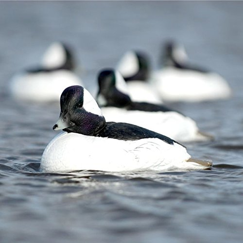 Hunting Gear Over-Size Buffleheads (1/2 Dozen) by Avery (Image #2)