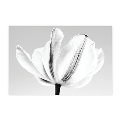 Amazon.com: Minimalist Flower Wall Art, Modern Floral Wall Art ...