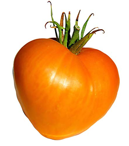 Orange Sweet Tomatoes - 30+ ORGANICALLY Grown Giant 2LBS Orange Oxheart Tomato Seeds, Heirloom Non-GMO, Early, Orange, Sweet, Low Acid, Indeterminate, Open-Pollinated, Delicious, from USA