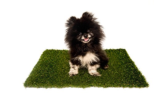 Best Pet Turf | The #1 Replacement Artificial Grass Patch for PetMaker 20