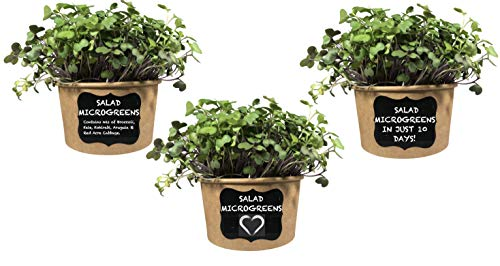 Easy Salad Mix MICROGREENS KIT (3 Pack) - Just Add Water & Grow Your own Nutrition in 10 Days. Includes Salad Mix Seed, Fiber Soil, Cups, Chalkboard Labels & Chalk.