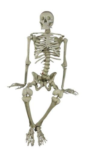 Budget BuckyTM Skeleton (4th Quality) CH10D4 (Skeleton Bucky)