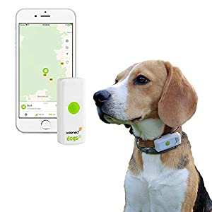 Weenect Dogs - The GPS tracker for Dogs 12