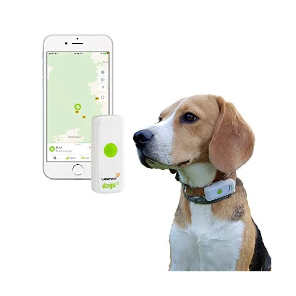 Weenect Dogs - The GPS tracker for Dogs 1