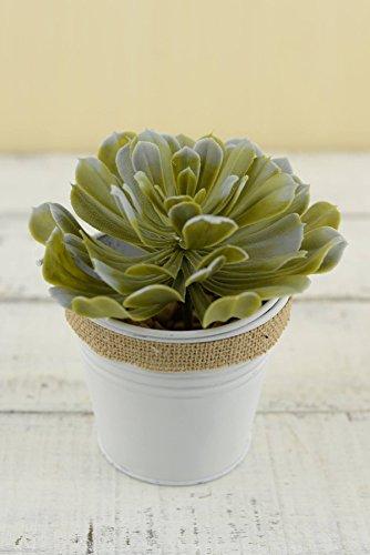Artificial Aeonium Succulent Pick 5.5 x 4 (Little Lamb Hot Pot)