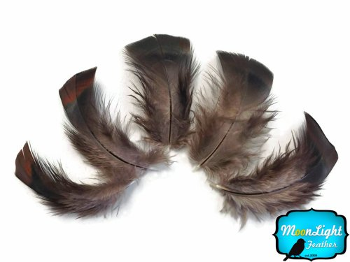 (Turkey Feathers, Turkey Plumage - Black Bronze Wild Turkey T-base Plumage Feathers - 50 Pieces)