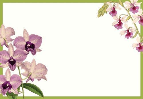 Amazon Party Invitations 16 Party Invites by Caspari Orchid – Garden Party Invitations