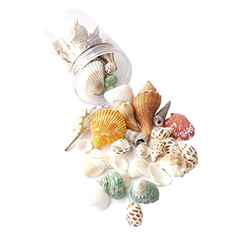 Mini Beach Natural Shells - Sea Shells Mixed Ocean Beach Seashells-(8.5oz) 1
