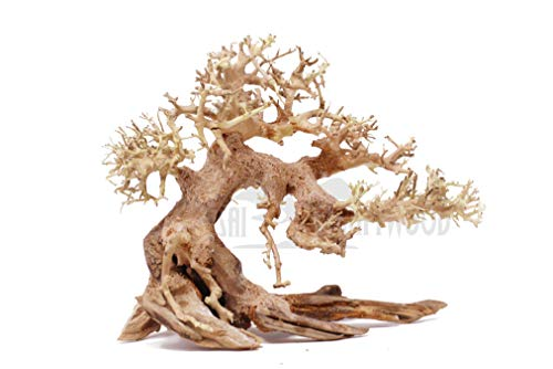 Bonsai Driftwood Aquarium Tree AS random pick (6in H x 8in L) Natural, Handcrafted Fish Tank Decoration | Helps Balance Water pH Levels, Stabilizes Environments | Easy to Install ()