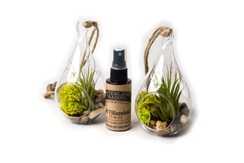 Air Plant River Side Set B, 2 Teardrop Terrarium Combo Pack with 2 oz. Fertilizer