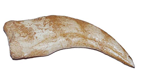 Spinosaurus Dinosaur Hand Claw Cast (Replica - NOT REAL FOSSIL) #237 4o