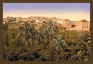Jaffa Garden Fine art Giclee canvas print (20