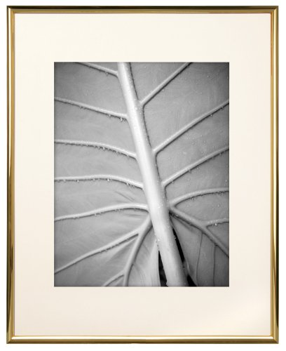 MCS 11x14 Inch Gallery Aluminum Frame with 8x10 Inch Mat Opening, Gold (Gallery Aluminum Frame)