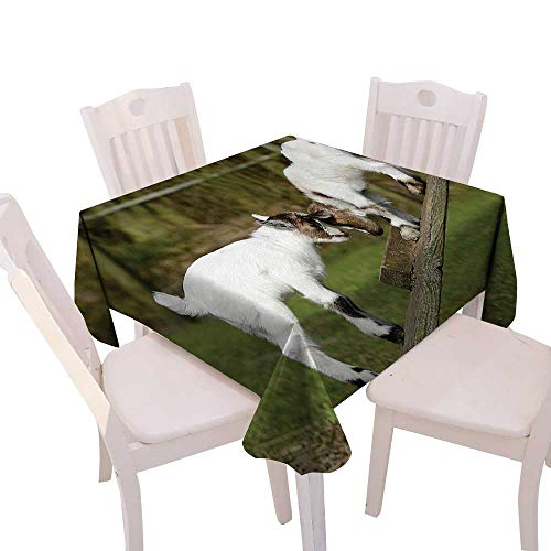 90x40 Horn 2 - Cheery-Home Square Table Cloth Foot Table in Washable Polyester Suitable All Occasions,(W70 x L70) Animal Decor Two Little Baby Goats on a Bench Fighting Their Horns Picture Image White Green.