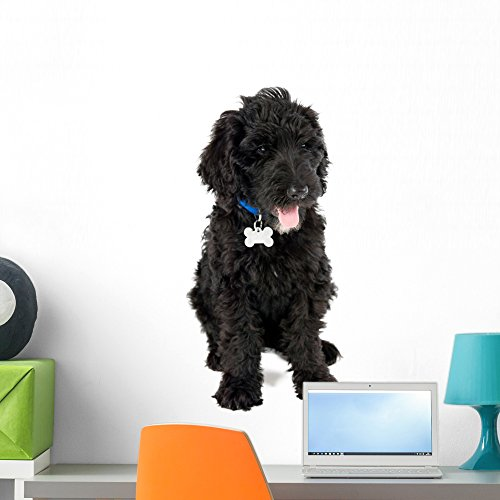 Wallmonkeys FOT-98915323-24 WM359990 Black Labradoodle Puppy Dog Peel and Stick Wall Decals (24 in H x 17 in W), Medium (Sticker Black Poodle)