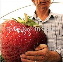 200pcs-big-giant-red-fruit-strawberry-seeds-diy-garden-fruit-seeds-balcony-seed-potted-plants-garden