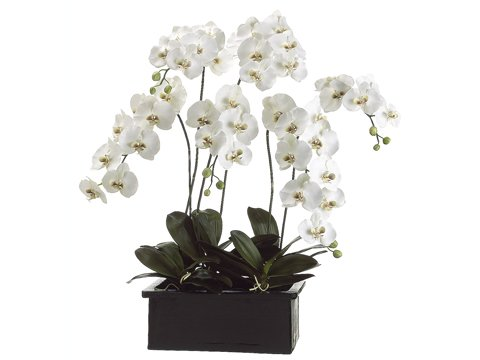 42'' Phalaenopsis Orchid Plant in Terra Cotta Pot White Green by Tori Home