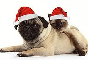 Pug cachorrinho cão Natural concha mãe da pérola quadrado punho SCS233 caixa de presente