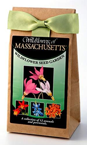 Massachusetts Wildflower Seed Mix - A Beautiful Collection of Twelve Annuals & Perennials - Enjoy The Natural Beauty of Massachusetts Flowers in Your Own Home Garden