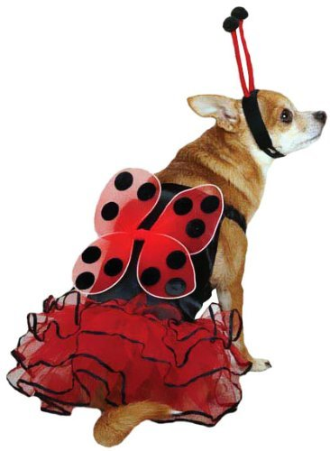 [Casual Canine Lucky Bug Dog Costume (Small)] (Holloween Spirits Costumes)